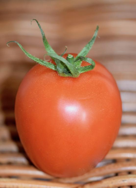Tipps & Infos: Urlaubsküche aus der Mikrowelle - 14 Tipps für das Kochen mit der Mikrowelle - Tomate