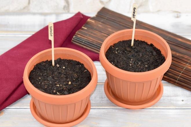 einen eigenen Kräutergarten anlegen - Kräutergarten - anlegen - Balkon - Fensterbank - Küche - Frühling - Terrasse - DIY Indoor-Kräutergarten - säen - pflegen - gießen - düngen - ernten - Kräuter